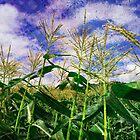 Harvest by teresa731