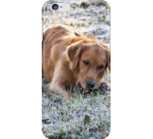 Frosted dog iPhone Case/Skin
