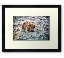 Frosted dog Framed Print