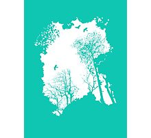 Forest Silhouette Photographic Print