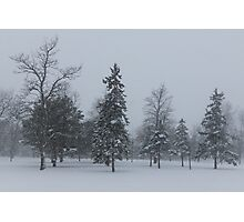 A Cold December Morning - Snowstorm in the Park Photographic Print