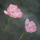 Brave Tulips by Kenneth Hoffman