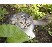 Cat in the garden 2 Photographic Print