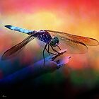 DRAGONFLY PINK AND GOLDEN DUSK by Tammera