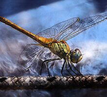 DRAGONFLY BLUE BALANCE by Tammera