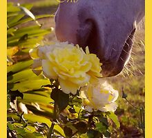 Stop and Smell the Roses (with text) by Penny Kittel