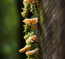 ~ Fabulous Fungi ~ by Leeo
