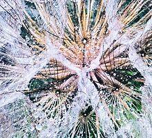 dandelion by CAPTUREtheCROW