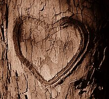 Tree Heart by Nathan Little