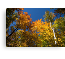 Glorious Fall Colors - Just Lift Your Head Canvas Print