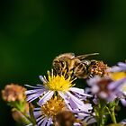 Bee 14 by Mark Bangert