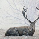 My Deer by vian