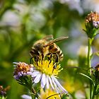 Bee 15 by Mark Bangert