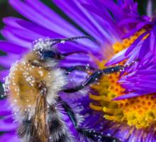Bee 17 Sticker