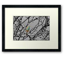 Blue Waxbill - Selective Beauty from Nature Framed Print