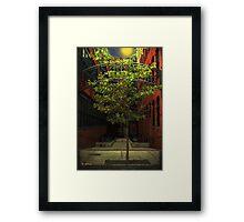 Fall Triumphant Framed Print