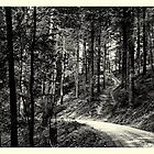 Through the forest #2 by Ronny Falkenstein