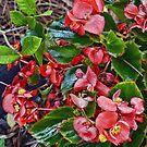 Alabama Begonia In October by Mike Pesseackey (crimsontideguy)