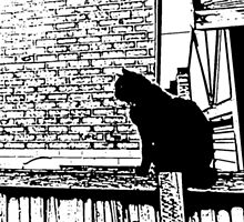 Black cat on a fence by Antti Muranen