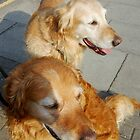 Twice as nice - Two Friendly Golden Retrievers by BlueMoonRose