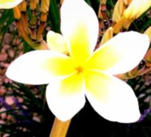Beautiful Plumeria Flowers  Sticker