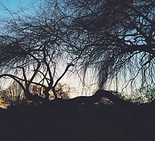 Sunset Silhouette through the Branches by lolohannah