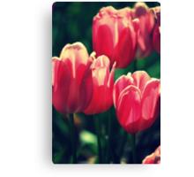 Volumptuous Tulips By Lorraine McCarthy Canvas Print