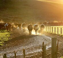 Early Milkers - Dairy NZ by AndreaEL