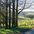 Shepard's Lane - Rural NZ by AndreaEL