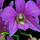Orchid On Black by John Butler