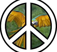 Parrot Peace by mhaidiArt