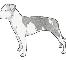 Staffordshire Terrier (grey and white) by heyletsart
