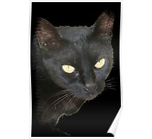 Black Cat Isolated on Black Background Poster