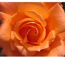 ORANGE ROSE Photographic Print