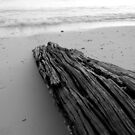 Driftwood in Black and White by sailgirl