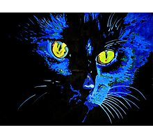 Marley The Cat Portrait With Striking Yellow Eyes Photographic Print