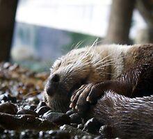 Sleepy otter by Maddie Porayko