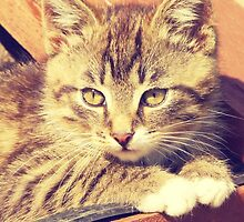 Retro Kitten Photo by AnnArtshock
