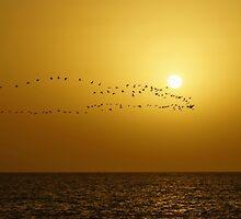 The sea, the bird's flight against a decline by mski