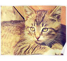Retro Kitten Photo 2 Poster