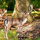 An impressive beautiful animal. by imagic
