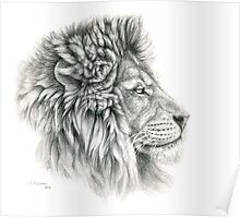 King - Lions profile g044 by schukina Poster