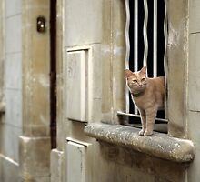 Ginger Cat - Arles, France by Kasia Nowak
