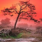 PINE IN FOG AT SUNSET by Chuck Wickham