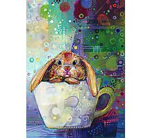 Bunny in a teacup Photographic Print