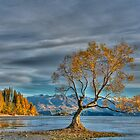 The Lone Tree, Lake Wanaka by Images Abound | Neil Protheroe