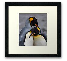 I Wuv You! (King Penguins, South Georgia) Framed Print