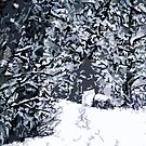SNOW COVERED FOREST 2 by pjmurphy