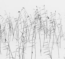Reeds in winter by Forestpictures