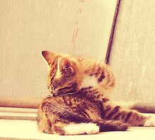 Retro Kitten Photo 4 by AnnArtshock